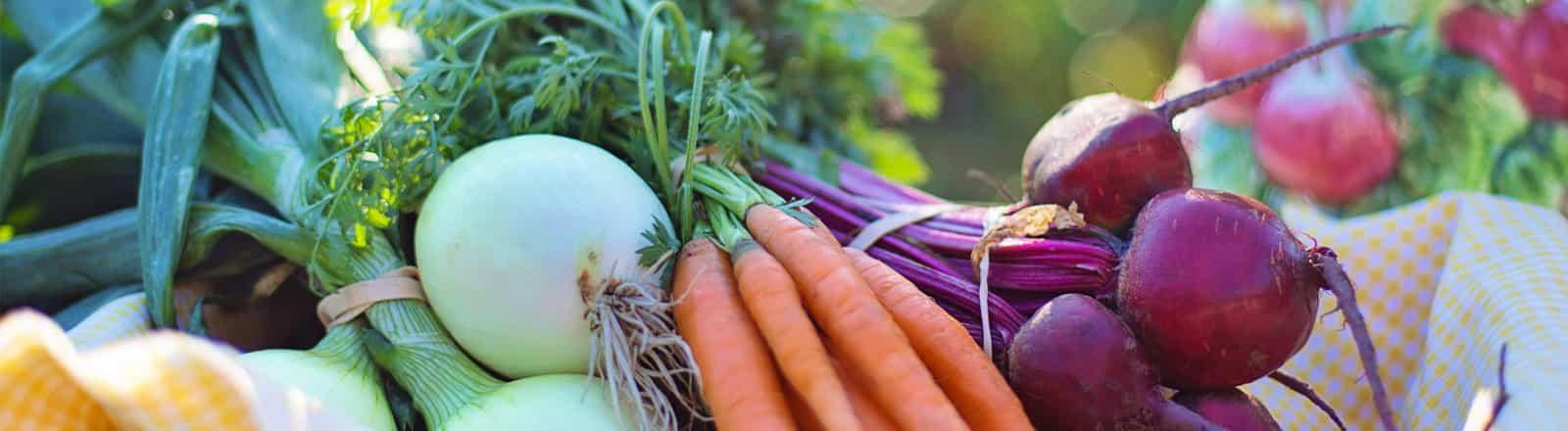 nutricion y vision integral nutricion