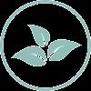 plantas medicinales y alimentacion herramienta fisioclinics